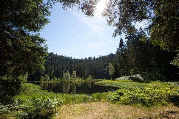 Baiersbronner Seensteig
