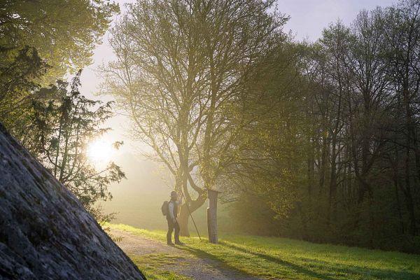 Sauerland-Waldroute