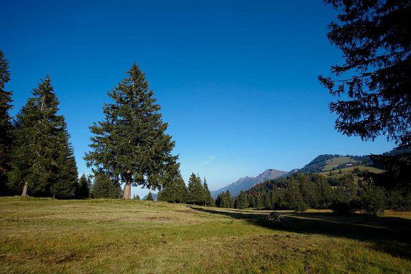 Alpenfreiheit Oberstaufen