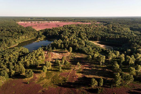 Naturerlebnispfad Südheide - das Gold der Heide